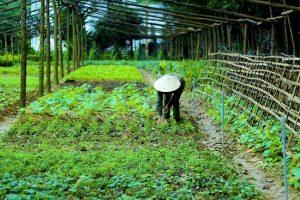 Homestay ở Quảng Bình -Chày Lập Farmstay