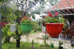 Homestay ở Quảng Bình -Pomelo homestay