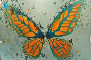 tường bướm the ayatt coffee - địa điểm sống ảo tại quảng bình